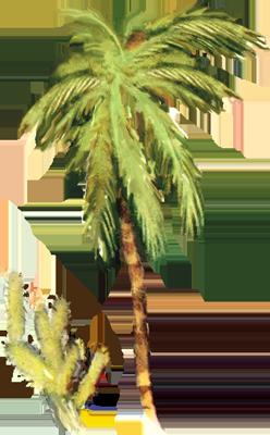 Пальма и колючка